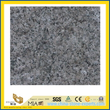 Polished Classic Grey Granite Countertop for Bathroom/Kitchen
